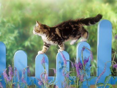 Gato-caminando-solo