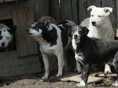 perros-abandonados-radio-chicureo-400x300