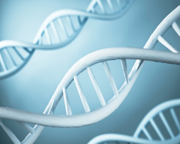 hitos-cientificos-2014-genetica-0365c262c7ae9e6e9da09be5362d2beec07feb3e-8146