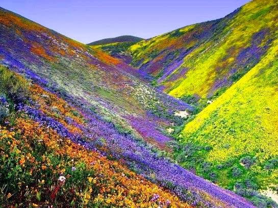 desierto florido en Atacama _