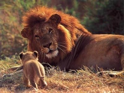 leon-macho-cria-400x300-radio-chicureo