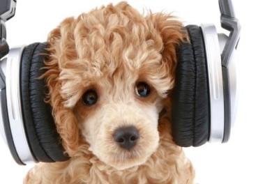 musica-tendencia-radio-chicureo-online-400x300