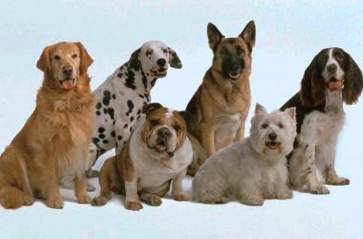 expo-perros-radio-chicureo-panoramas